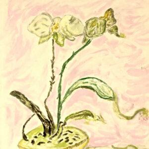 Francis U. Cochran Butterfly Orchid_0854
